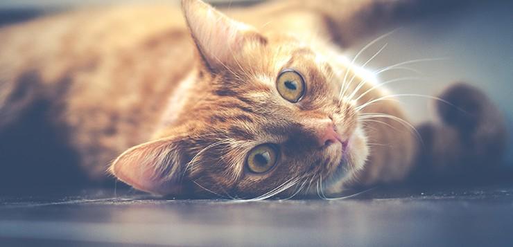kedinin hiçbir suçu yok! - kedininhicbirsucuyok - Kedinin Hiçbir Suçu Yok!